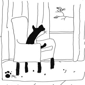 mèo kid cô đơn